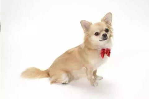 几月出生的属狗人命运差 属狗人命里最苦是几月