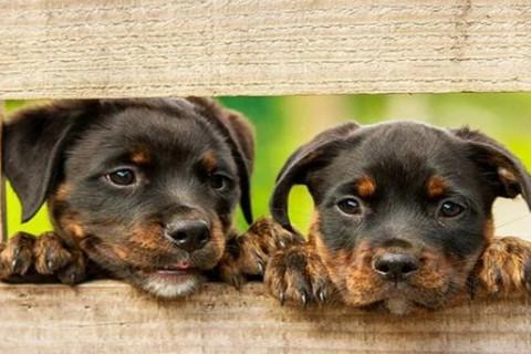 属狗女二婚才会幸福吗 属狗女性和谁最搭