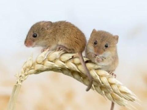 属鼠的和什么属相不合 与谁属相相克?