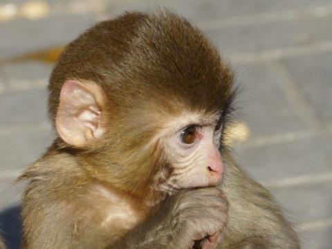 属猴的克星是谁 与谁属相相克?