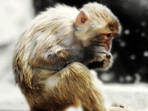 92年属猴男命好不好 能走大运吗?