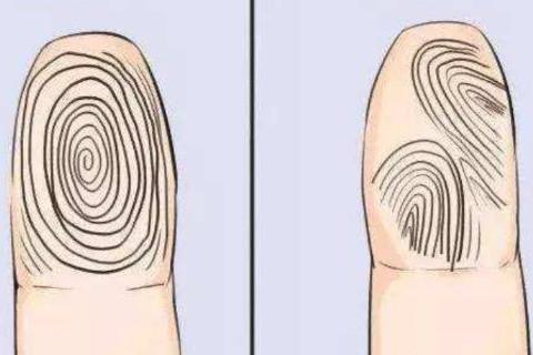 女人手上几个斗最好  手指上的斗和簸箕代表什么