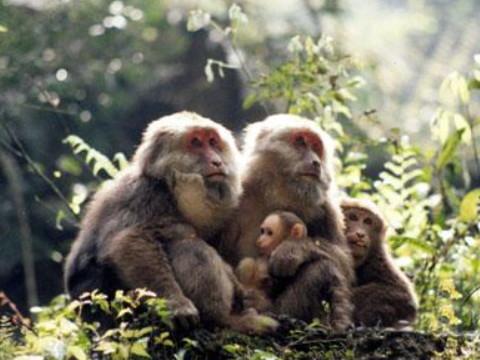 1992年属猴女的幸运颜色是什么颜色?