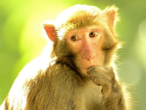 属猴女孩时辰出生最好 命好财运旺?