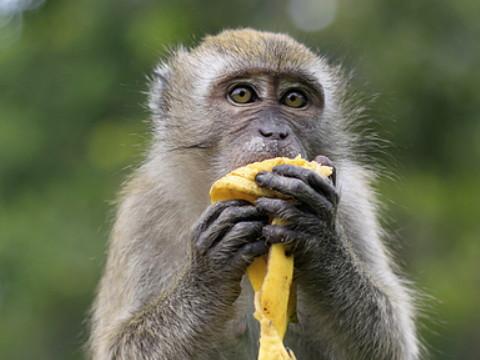 属猴的永久幸运颜色是什么 忌讳什么颜色?