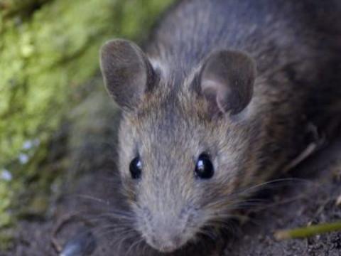 96年鼠女与什么属相最配对 和谁属相相合?