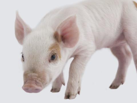 属猪在哪一年有偏财运 财富命运如何?