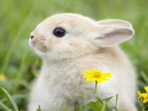 属兔的本命佛是哪尊佛 佩戴什么吉祥物好?