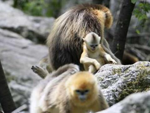 属猴的和什么属相最适合合作 贵人是谁?