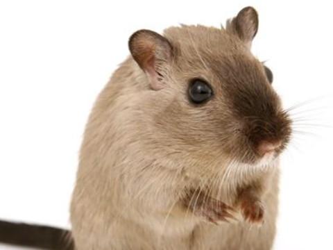 1972年属鼠人的运程运势 一生命运如何?