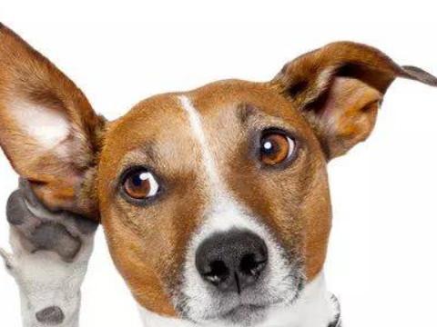 94年属狗的姻缘晚婚吗 最佳婚配是谁?
