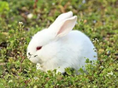 属兔和什么属相最配 婚姻感情命运如何?