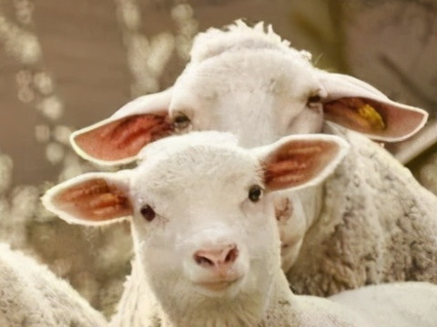 1991属羊男的婚姻状况 婚姻感情命运如何?