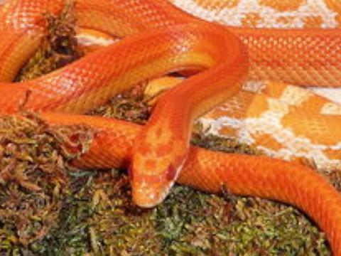 女蛇不能和什么属相婚配 有什么属相相克?