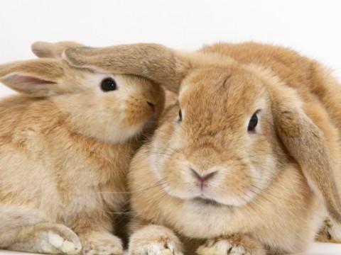 女人佩戴本命佛的好处 属兔女适合什么吉祥物?