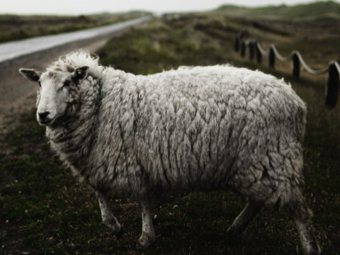 1991年属羊人财运 什么时候能发财?