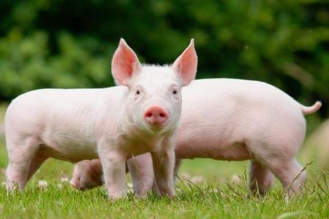 95年的属猪人几岁有子女好 适合生什么生肖的孩子