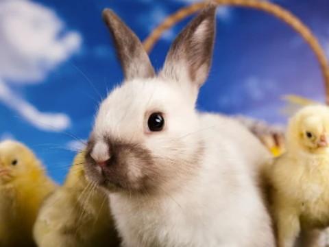 45岁属兔今年有灾了 如何化解?