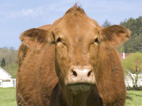 1997年属牛的是什么命 命好吗?