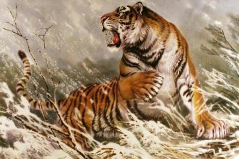 什么东西最旺属虎人 可以给属虎人带来好运的吉祥物-第1张图片-天下生肖网