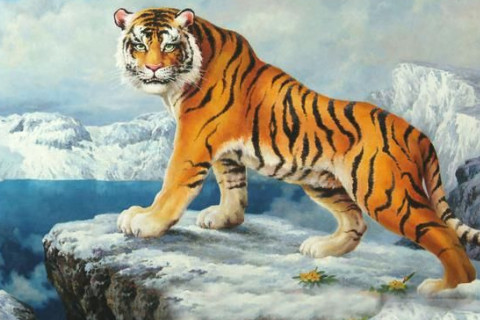 1986年的属虎最难是几年  什么年份最坎坷曲折
