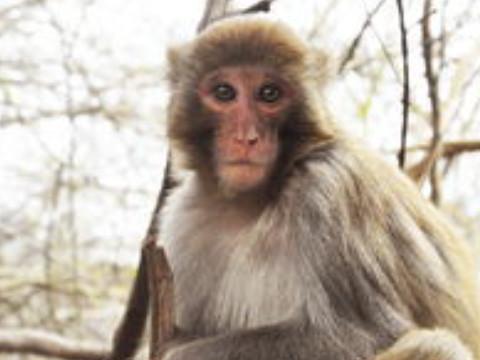 80年的猴的性格脾气好吗 命运如何?