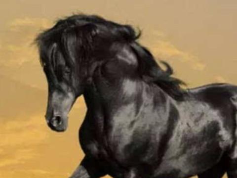 属马的和什么属相的人最合适 和谁属相相合?
