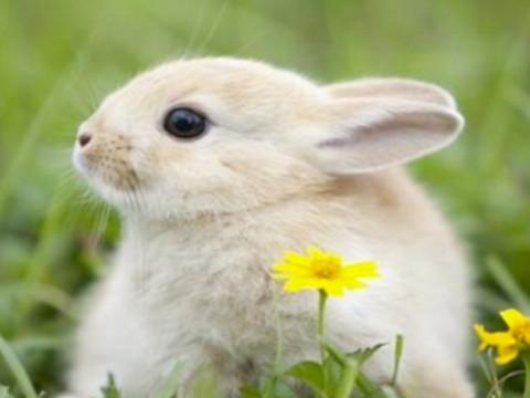 1999年属最佳婚配 属兔人和谁属相相合?