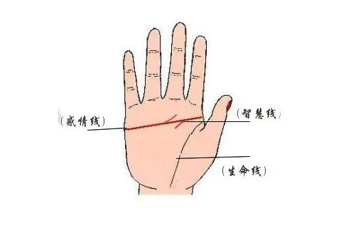 女人右手断掌图解算命 右手断掌的女人命运如何