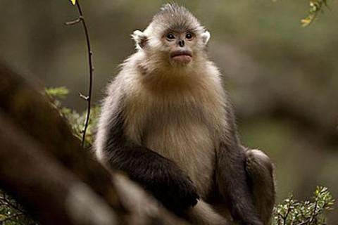 属猴命中有缘的人是谁 与什么样子的人命中注定