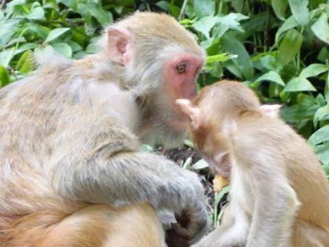 猴和什么属相最合得来 与谁属相相合?