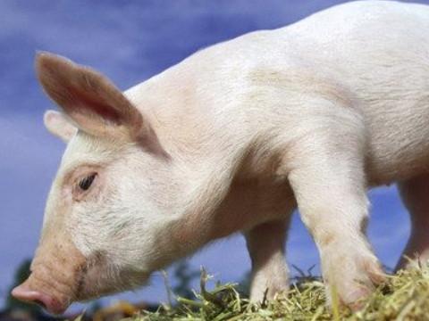 84年属猪的人命好吗 能走大运吗?