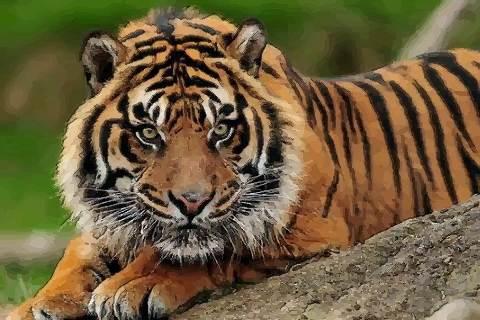 1986年属虎人佩戴哪种吉祥物招财 1986年属虎人的旺财饰品