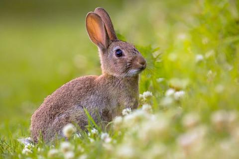 1963年属兔人2022年运势及运程 59岁属兔人虎年运势解析